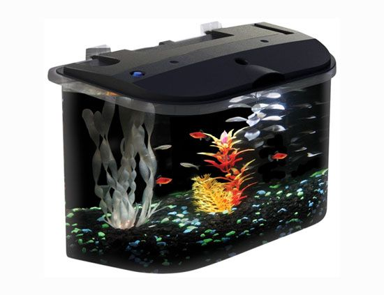 Aquarius Aq15005 5-Gallon Aquarium