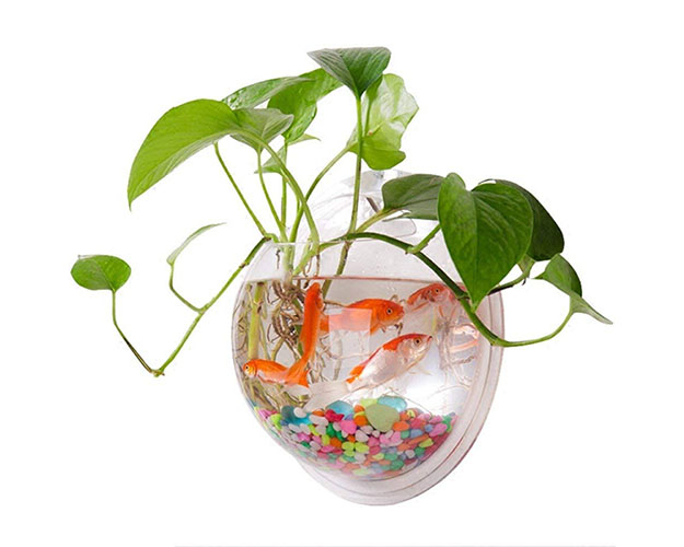 Wall Mount Fish Bowl